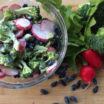 Salade brocoli, radis et camerises